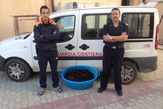 Marsala: La Guardia Costiera sequestra 400 ricci di mare