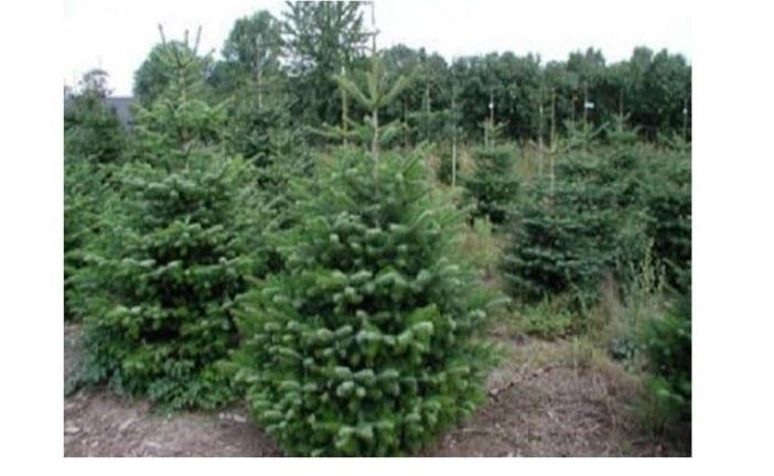 Trapani: alberi natalizi gratuiti per i commercianti
