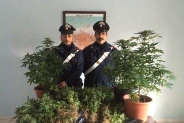 Arrestato incensurato alcamese. I Carabinieri scoprono un bunker sotterraneo, dove veniva coltivata canapa indiana.