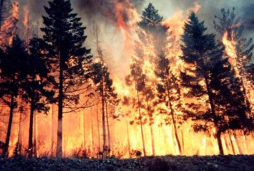Incendio ad Erice