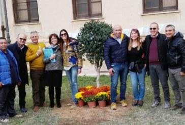 Mazara, Festa dell'Albero